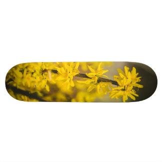 Flores amarelas da árvore skateboard