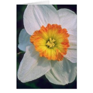 Flores amarelas do narciso cartoes