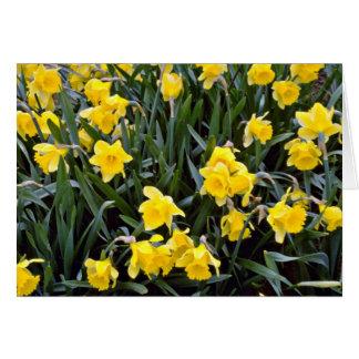 Flores amarelas do narciso cartao