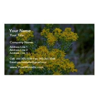 Flores amarelas do Tansy Cartão De Visita