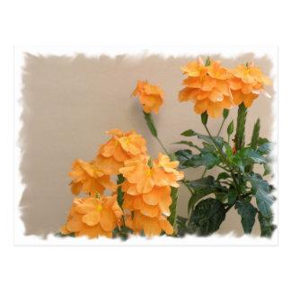 Flores Anaranjadas Cartão Postal