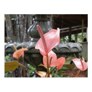 Flores Anturio Cartão Postal