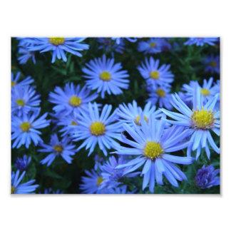Flores azuis de Daisie Fotografia