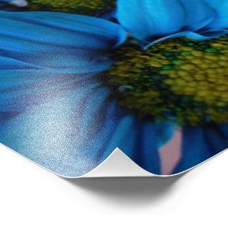 Flores azuis e amarelas impressão de foto