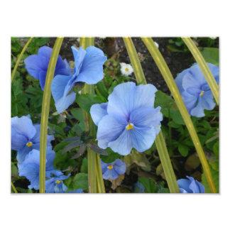 Flores azuis foto artes