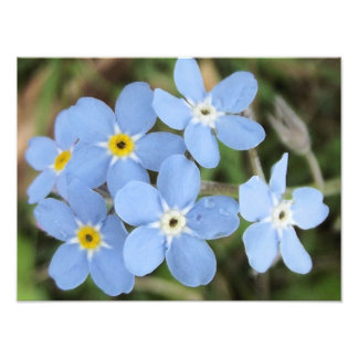 flores azuis minúsculas fotos