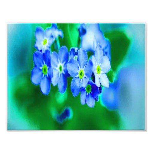 Flores azuis pequenas impressão de foto