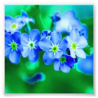 Flores azuis pequenas fotografias