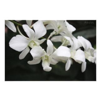 Flores brancas fotografias