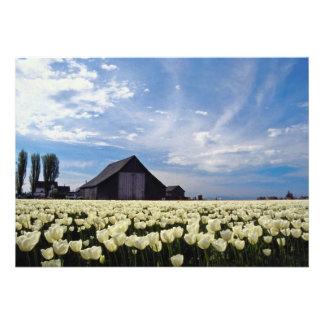 flores brancas da fazenda da tulipa convite
