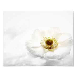 Flores brancas das anêmonas de madeira da flor da impressão fotográfica