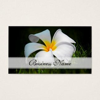 Flores brancas de Havaí do Frangipani do Plumeria Cartão De Visitas