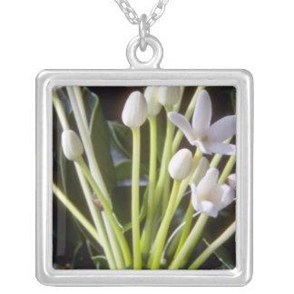 flores brancas do floribunda do Stephanotis Colar Banhado A Prata