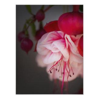 Flores brancas e vermelhas cor-de-rosa fúcsia fotografias