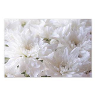 Flores brancas elegantes impressão fotográfica