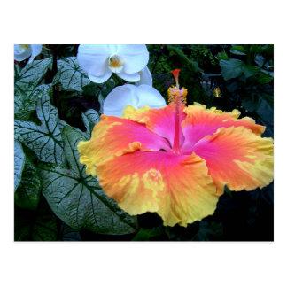 flores. cartão postal