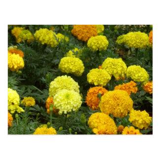 Flores Claveles Cartão Postal