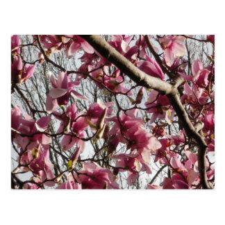 Flores cor-de-rosa cartão postal