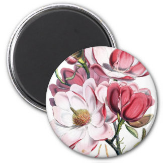 Flores cor-de-rosa da magnólia imã