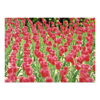 Flores cor-de-rosa das tulipas convites personalizado