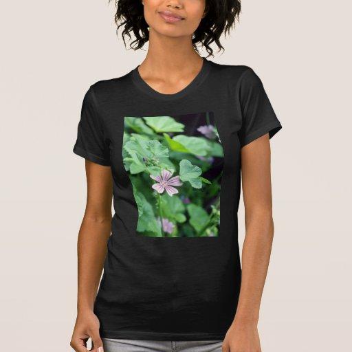 Flores cor-de-rosa do Mallow alto (Malva
