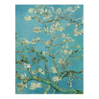 Flores da amêndoa por Vincent van Gogh Cartão Postal