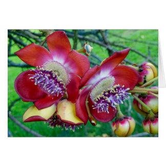 Flores da árvore da bala de canhão cartão comemorativo