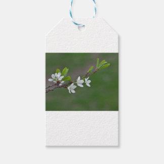 Flores da árvore de cereja etiqueta para presente