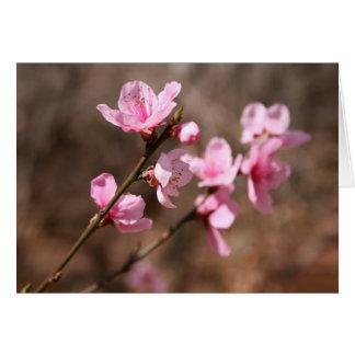 Flores da azálea cartão