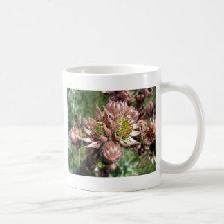 Flores da galinha e dos pintinhos (Sempervivum) Caneca De Café