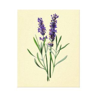 Flores da lavanda impressão em canvas