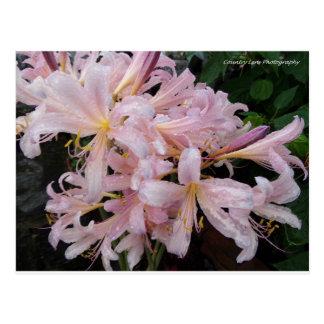 Flores da manhã cartão postal