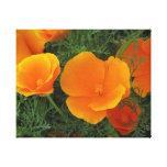 Flores da papoila de Califórnia Impressão Em Canvas