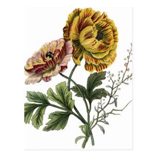 Flores da papoila do vintage cartão postal