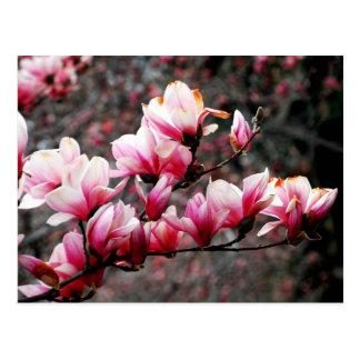 Flores da universidade de Georgetown, Washington, Cartão Postal