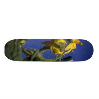 Flores das flores dos tomates shape de skate 18,1cm
