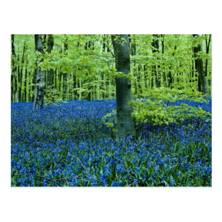 Flores das madeiras do Bluebell do Aqua Cartão Postal