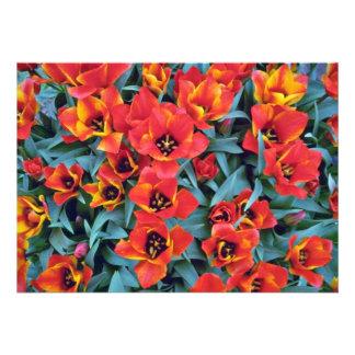 Flores das tulipas de anão vermelho convite personalizados