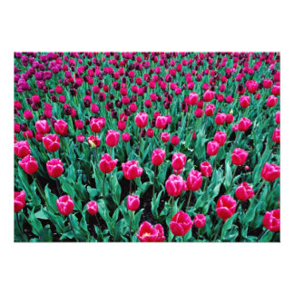 Flores das tulipas de Triumph Convites Personalizados
