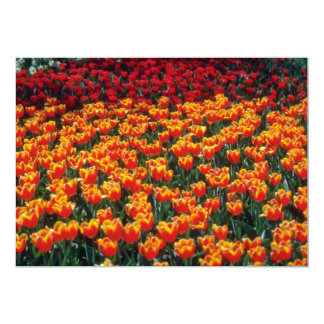 Flores das tulipas do vermelho alaranjado e do convites