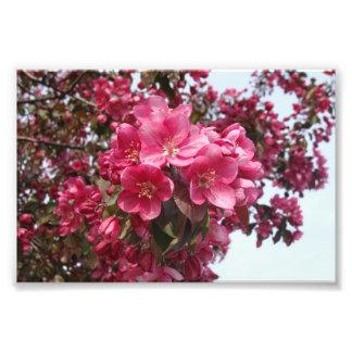 Flores de Apple de caranguejo Fotos