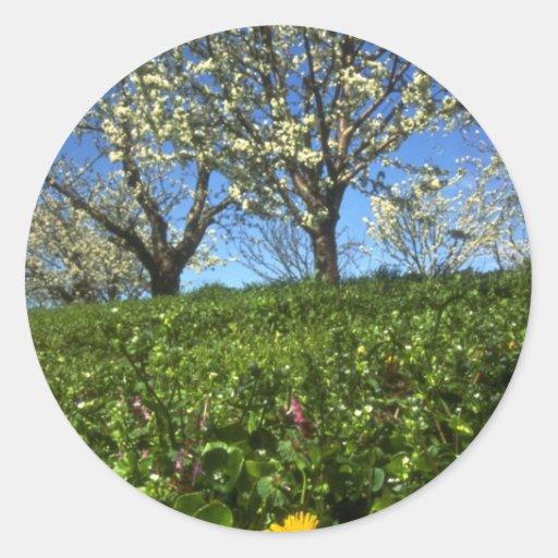 Flores de Apple, Hood River, Oregon Adesivo Em Formato Redondo