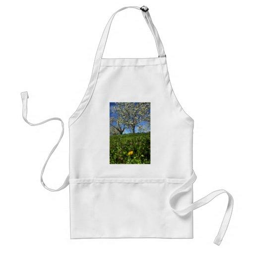 Flores de Apple, Hood River, Oregon Aventais