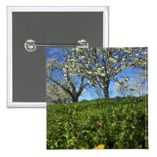 Flores de Apple, Hood River, Oregon Boton