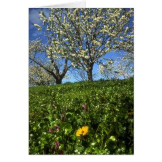 Flores de Apple, Hood River, Oregon Cartões