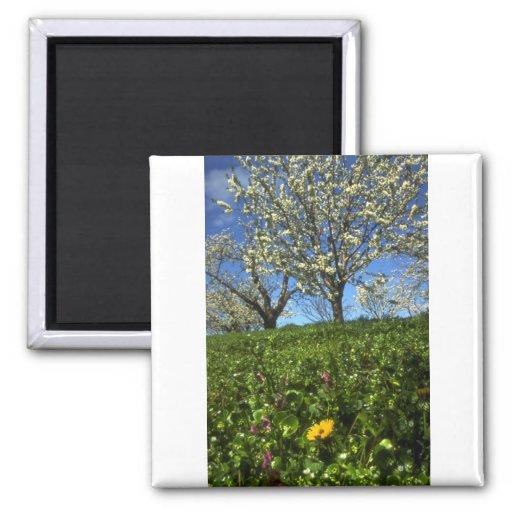Flores de Apple, Hood River, Oregon Imãs