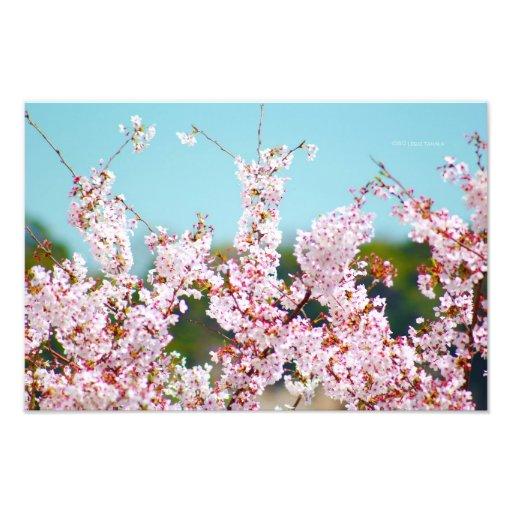 Flores de cerejeira e céus azuis fotografias