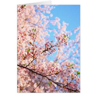 Flores de cerejeira no cartão de Japão