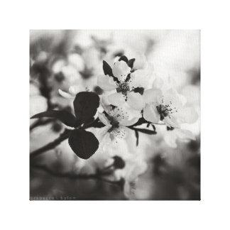 Flores de cerejeira no impressão preto & branco