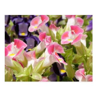 Flores de Festa Cartão Postal